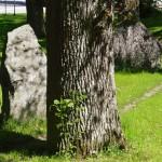 05Gletgarten05-3654_JF